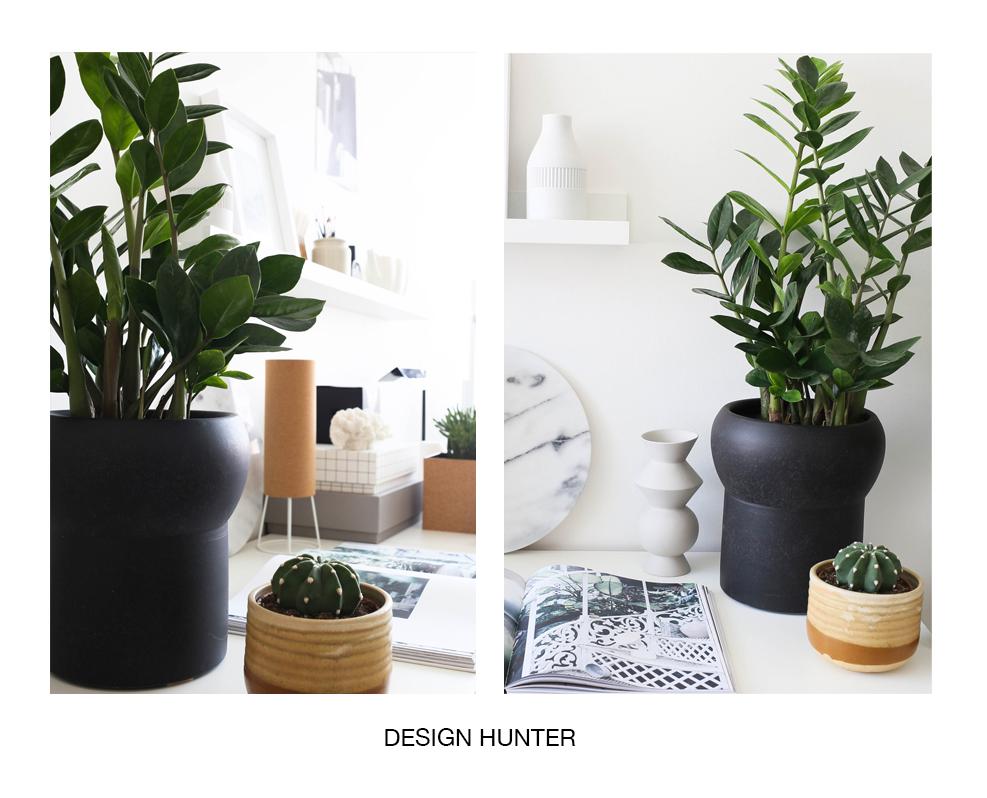 8 ідеальних рослин для вашої ванної кімнати