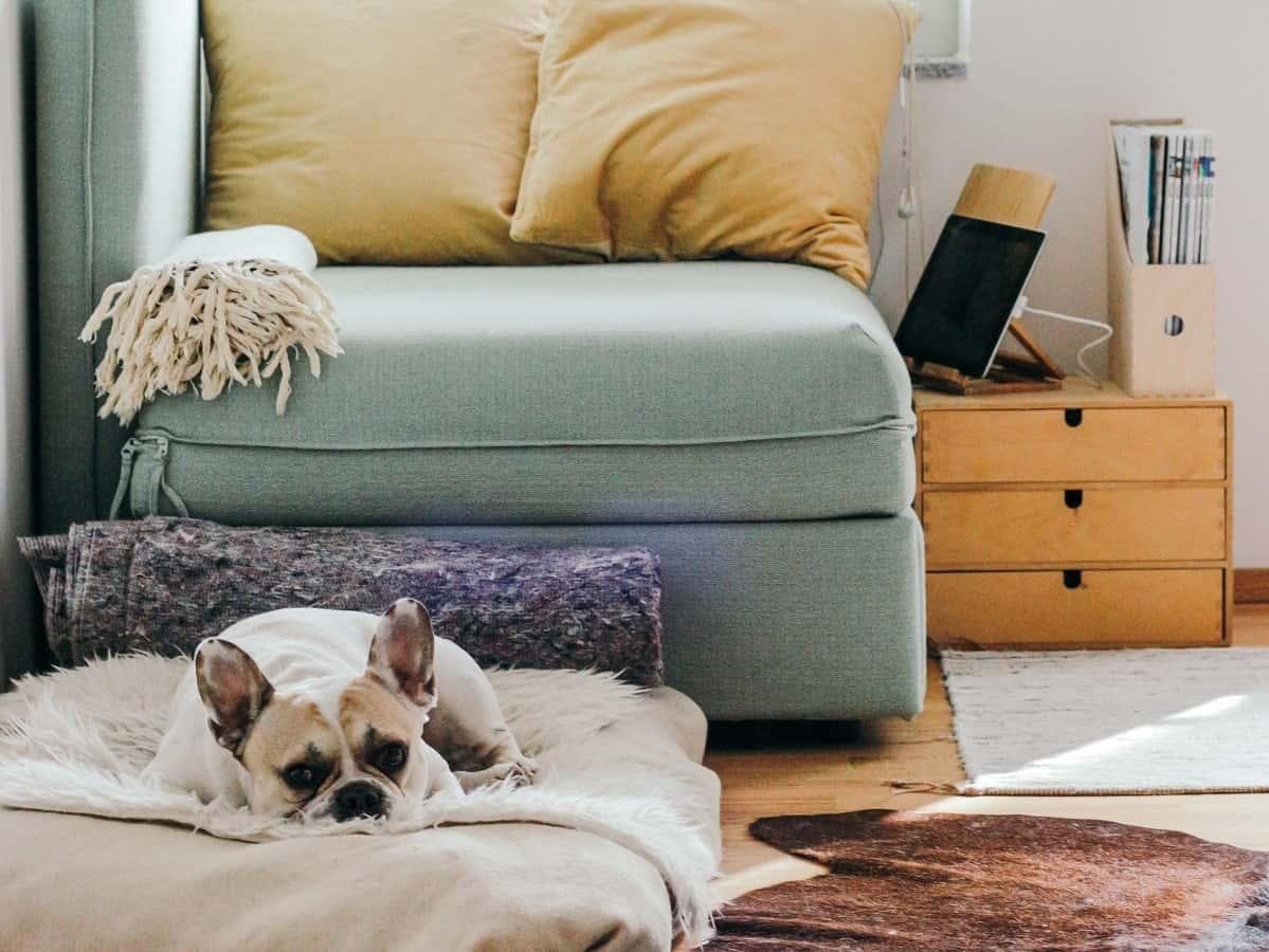 Любимцы дома: как почистить мебель и ковры от шерсти