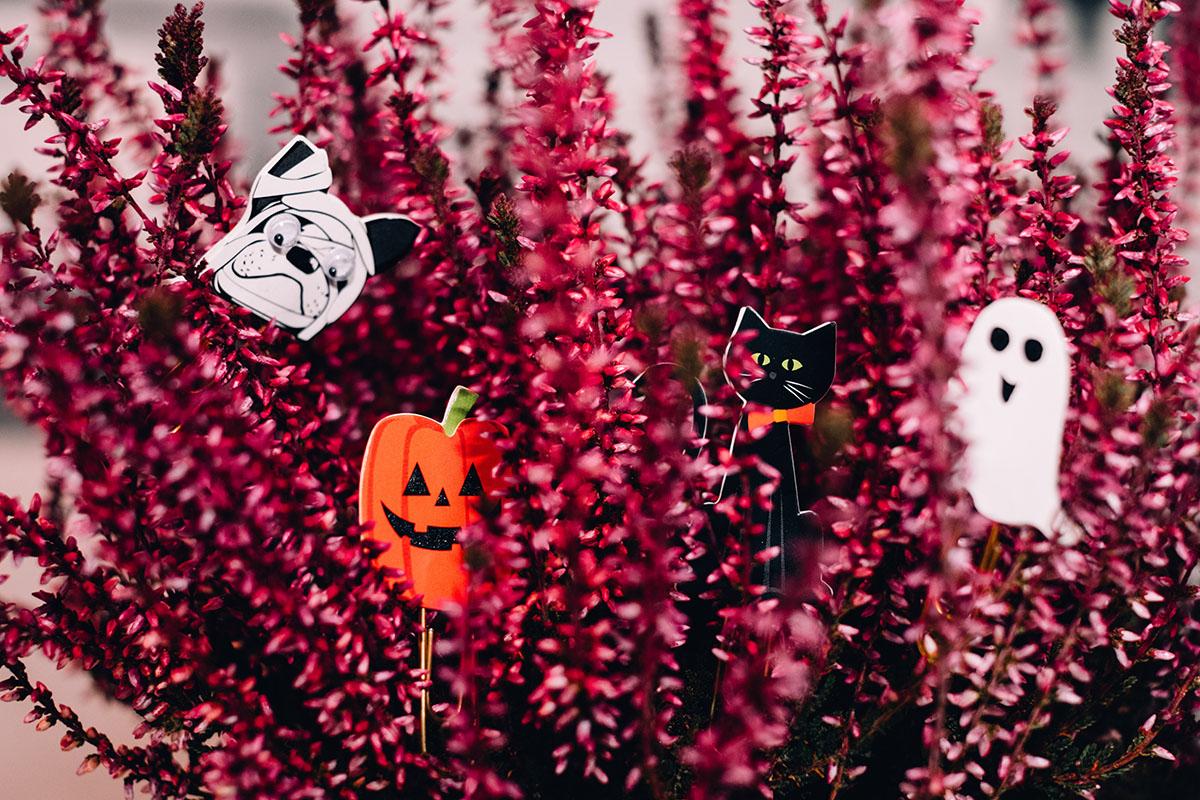 8 ідей, як прикрасити домівку на Хелловін