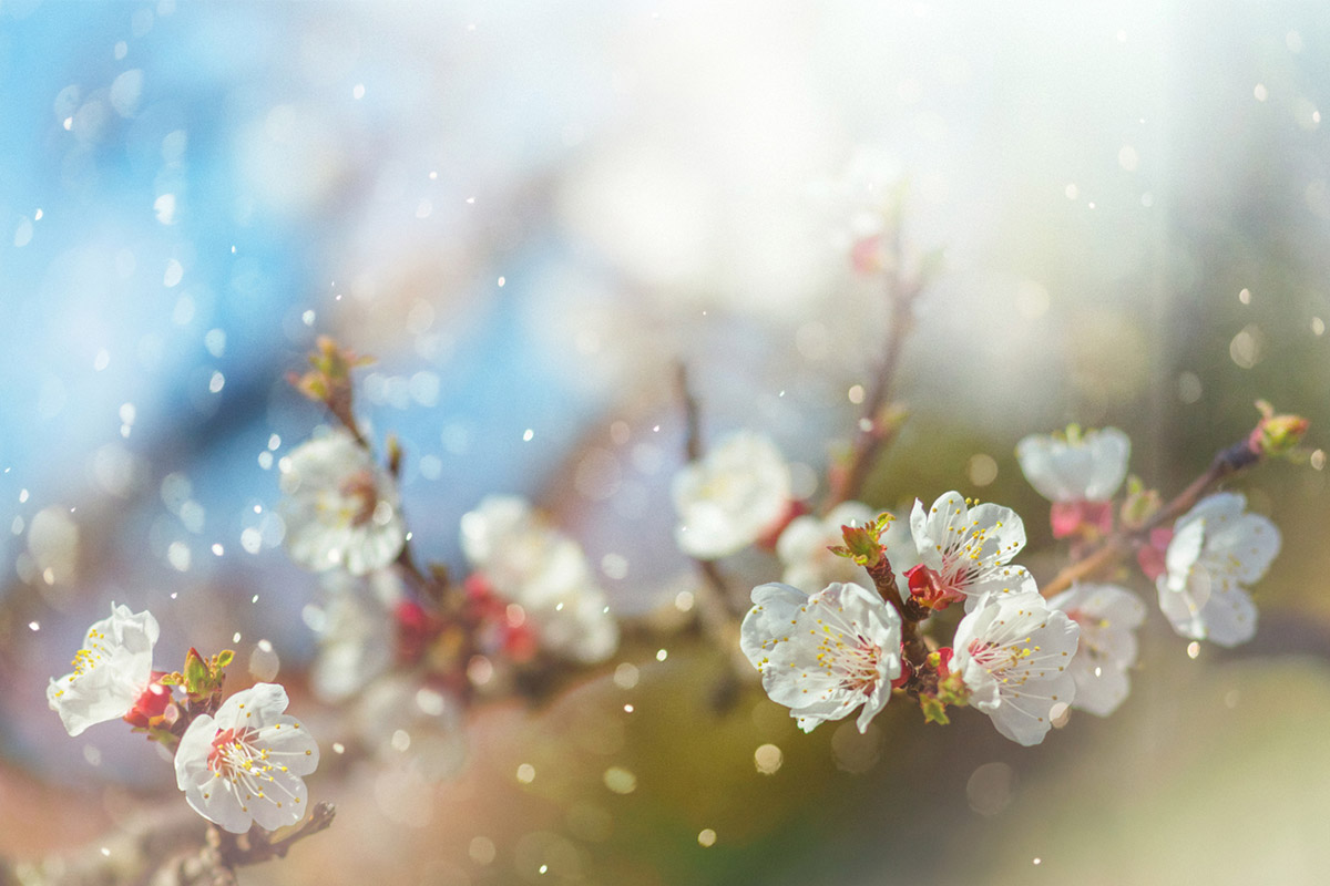 Весенняя аллергия: 8 хитростей для спасения от поллиноза